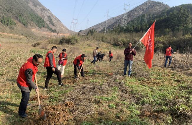 市民宗委积极开展义务植树活动